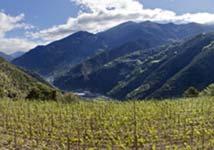 Andorran wines, wines from altitude