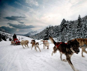 MUSHING IN VALLNORD